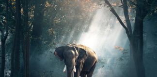 elephant dans la mode