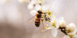 miel sur la santé