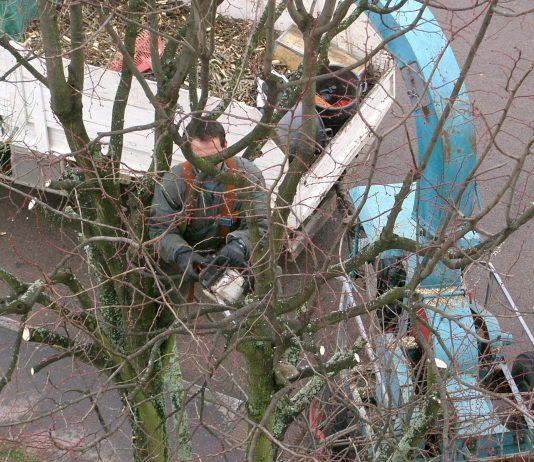 élagage d'arbre en toute sécurité